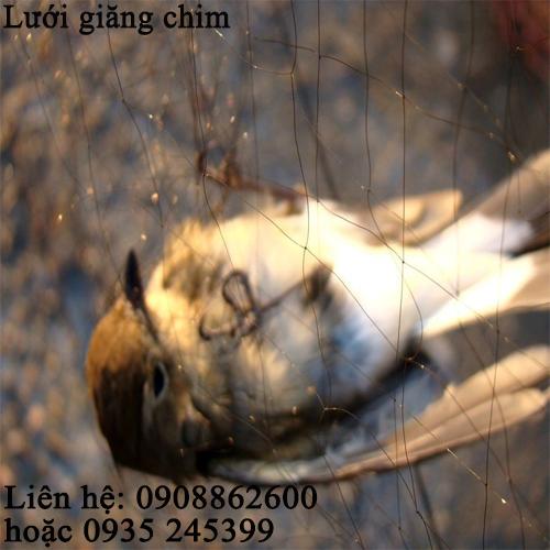 Lưới giăng chim